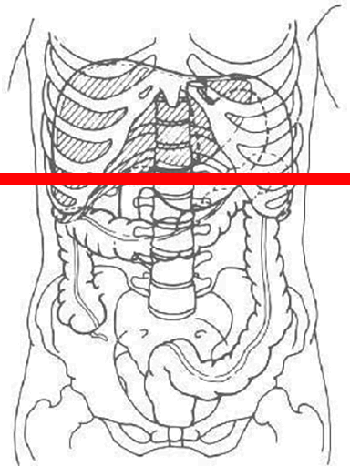 thoracoabdominal-slice-hg6410-cutting-plane.png
