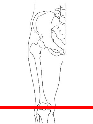 knee-joint-slice-hg6727-cutting-plane.png