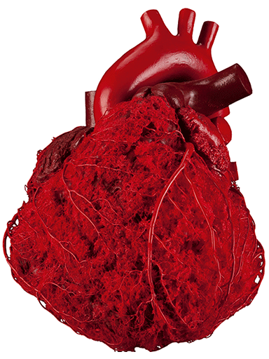 blood-vessel-configuration-of-the-human-heart-HC3001-front