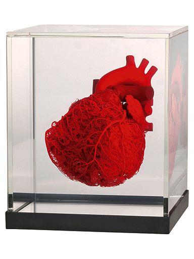 blood-vessel-configuration-of-the-human-heart-HC3002-front